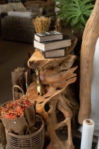 צמחים לבית|צמחיה וריהוט פנים|עציצים וריהוט